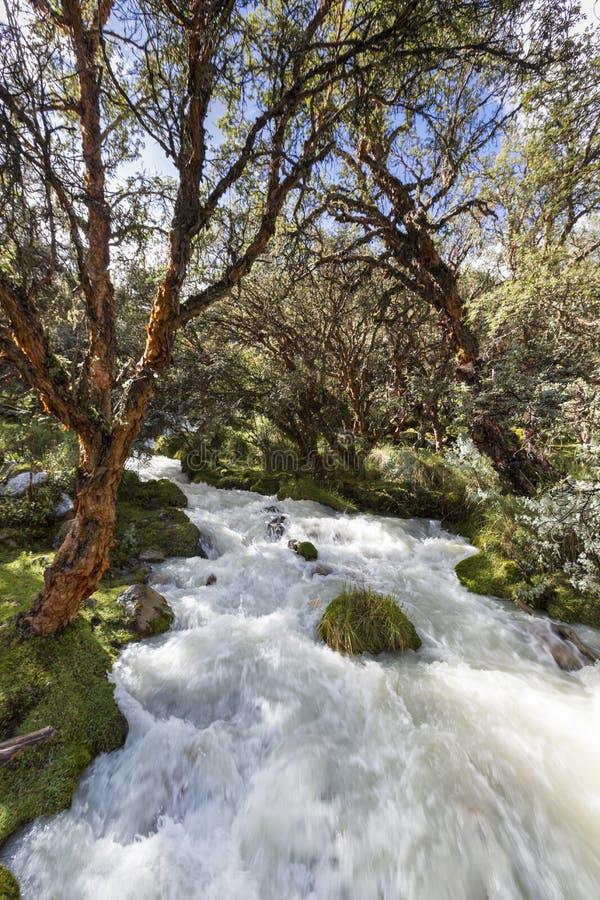 Rio e floresta verde luxúria perto de Huaraz em BLANCA de Cordilheira, Pe imagem de stock