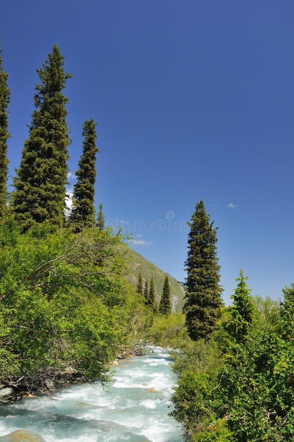 Rio e pele-árvores das montanhas foto de stock