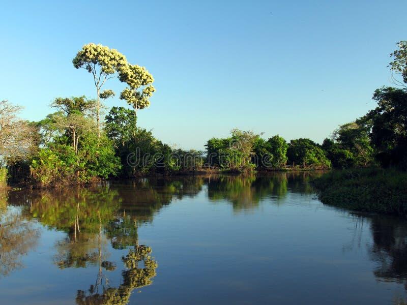 Rio em Amazónia imagens de stock royalty free