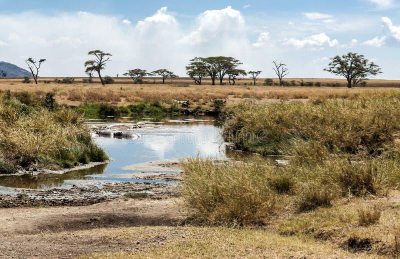 Rio em Tanzânia com hipopótamos imagem de stock