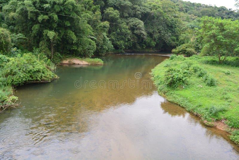 Rio em uma floresta fotos de stock royalty free