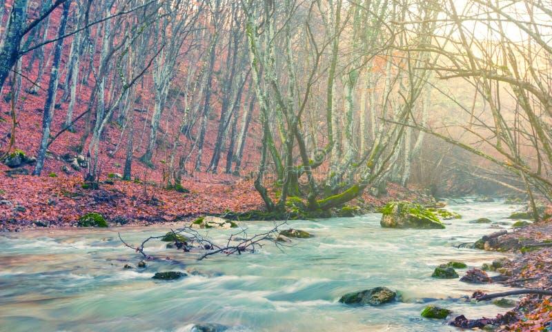 Rio esmeralda que apressa-se através da garganta da montanha imagem de stock royalty free