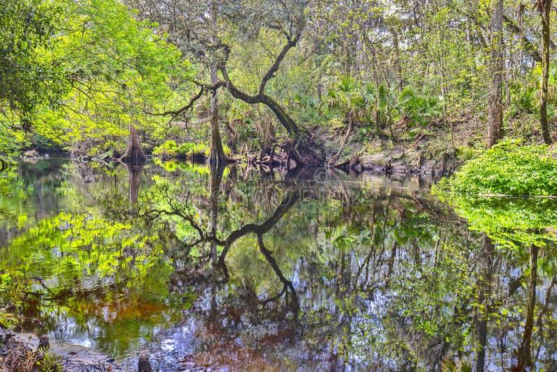 Rio Espelhado Na Floresta Sombreada fotos de stock