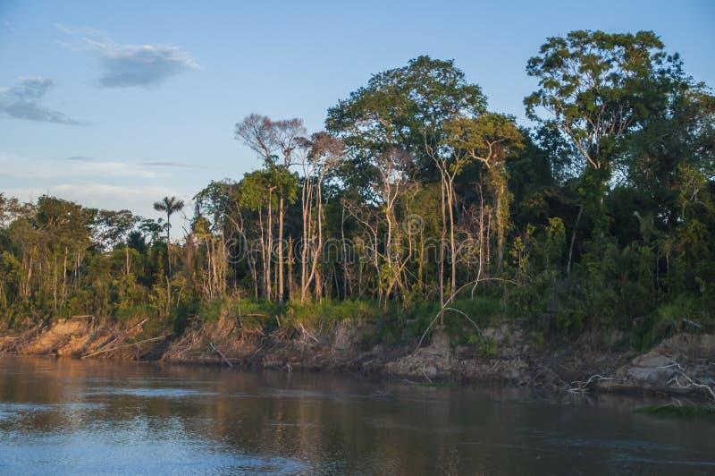 Rio & floresta tropical de Amazone fotos de stock royalty free