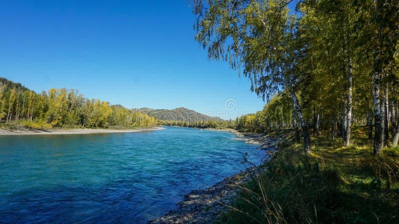 Rio Katun da montanha em Altai, Sibéria, Rússia imagens de stock