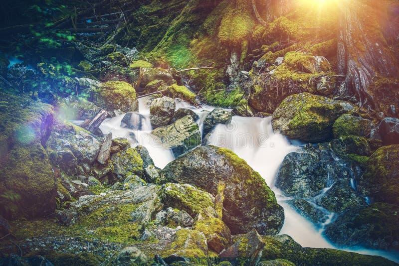 Rio musgoso da montanha fotos de stock royalty free