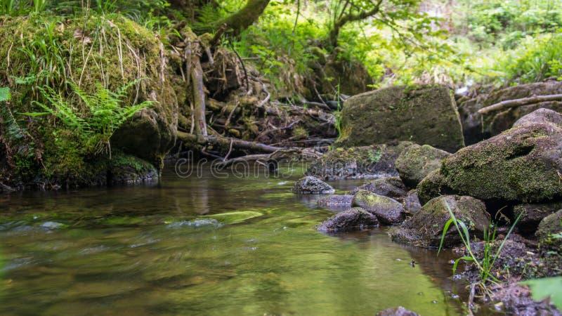 Rio na perspectiva da rã das madeiras imagens de stock