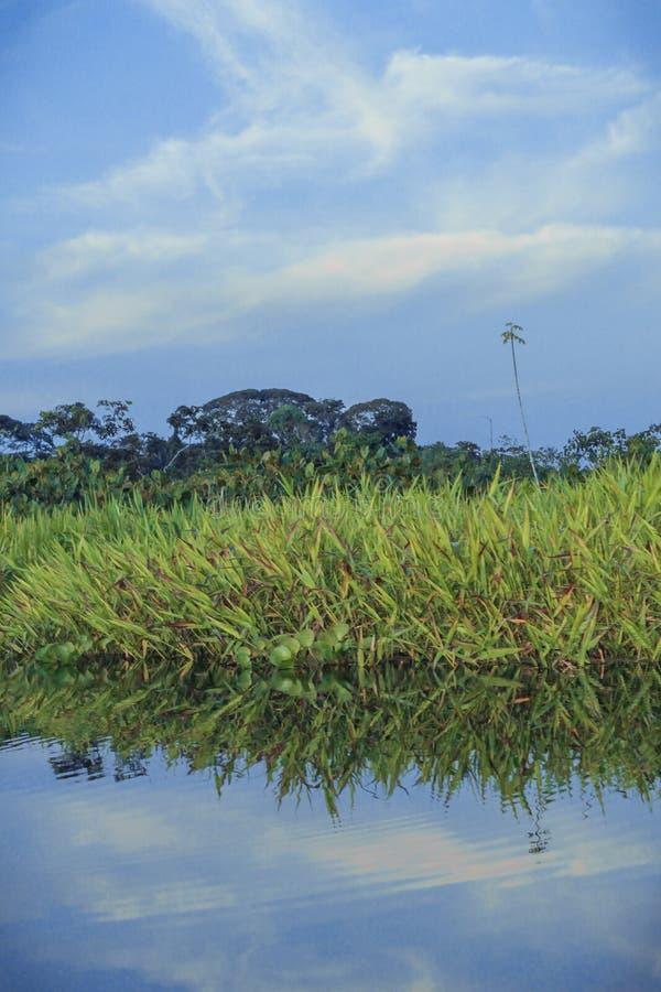 Rio nas Amazonas com folhas, céu e árvores fotografia de stock royalty free