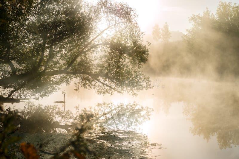 Rio nevoento fantástico com reflexão agradável na luz solar fotos de stock