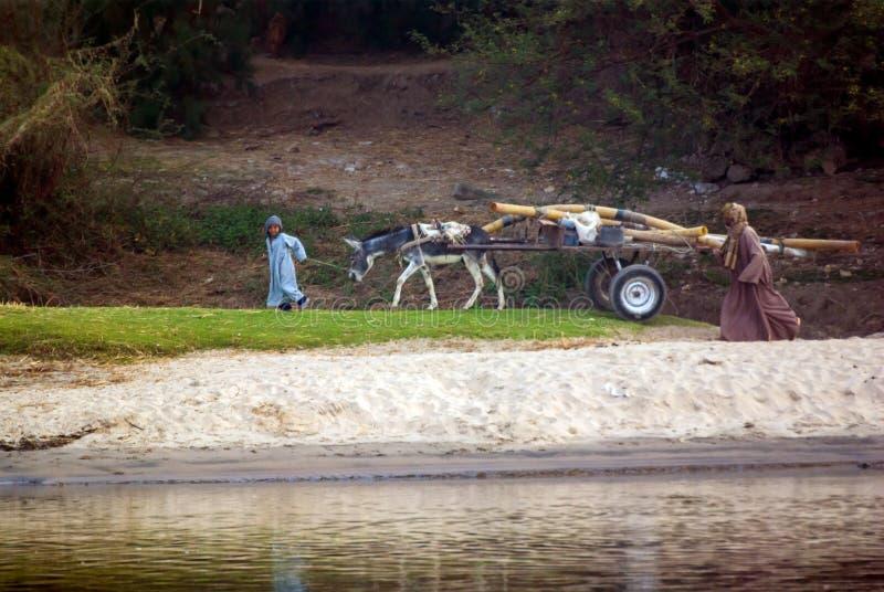 Rio Nilo, près de Louxor, l'Egypte, le 21 février 2017 : Enfant égyptien de sourire portant un chariot chargé et tiré par un âne, photos libres de droits