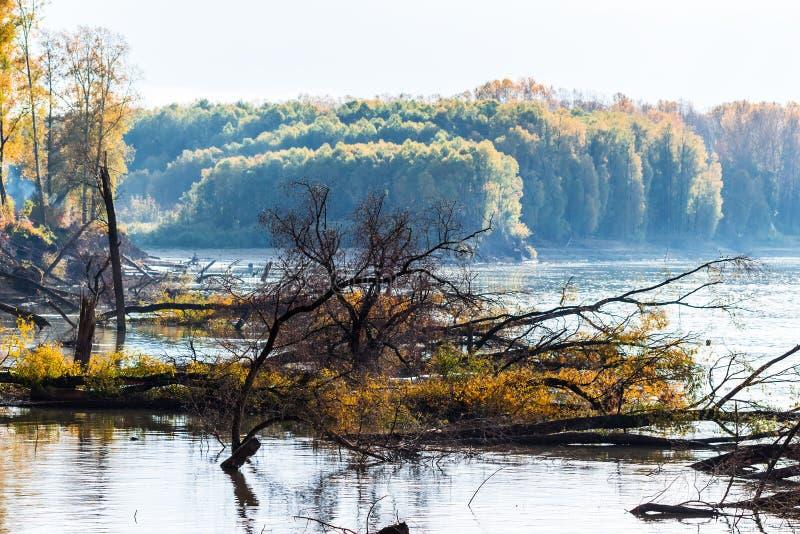 Rio Ob, outono Região de Sibéria ocidental, Novosibirsk, Suzun fotos de stock royalty free