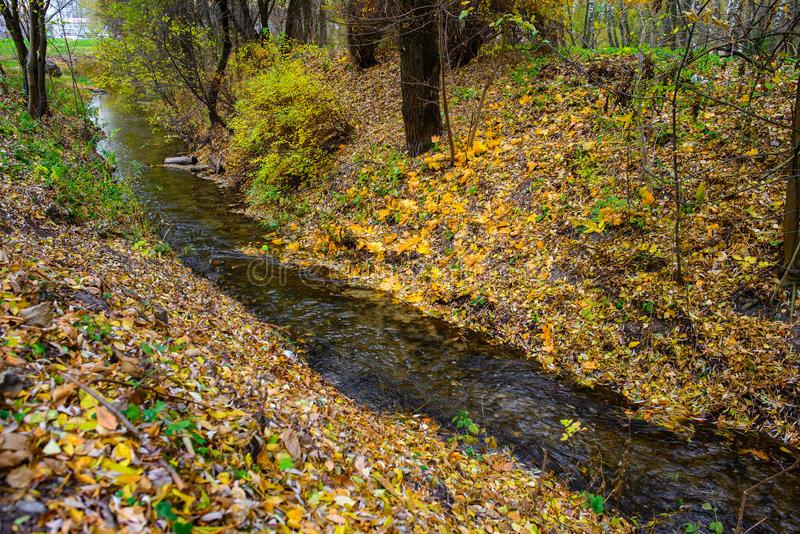 Rio pequeno na floresta do outono fotografia de stock