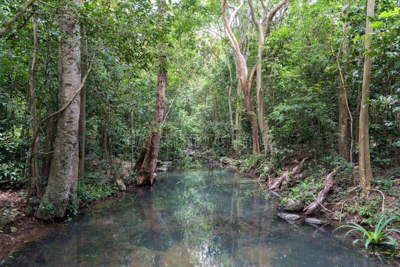 Rio pequeno na floresta tropical tropical profunda no verão fotografia de stock