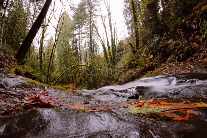 Rio pequeno que corre atrav?s de uma floresta imagem de stock