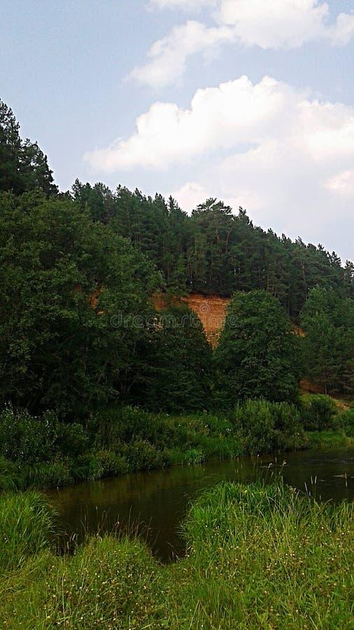 Rio perto da floresta fotografia de stock