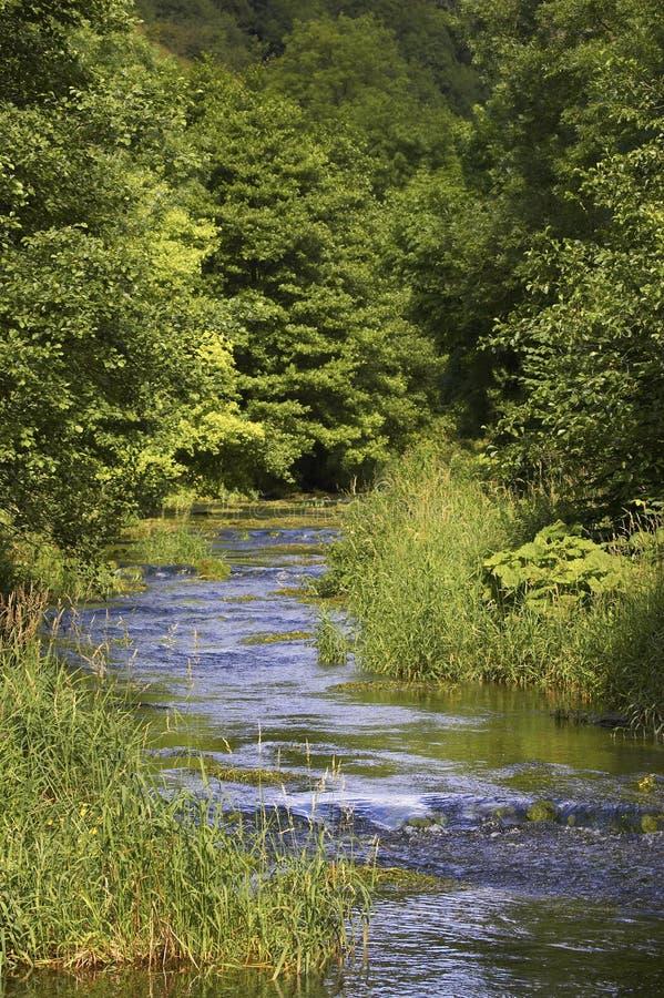 Rio que corre através da rota alinhada árvore imagens de stock royalty free