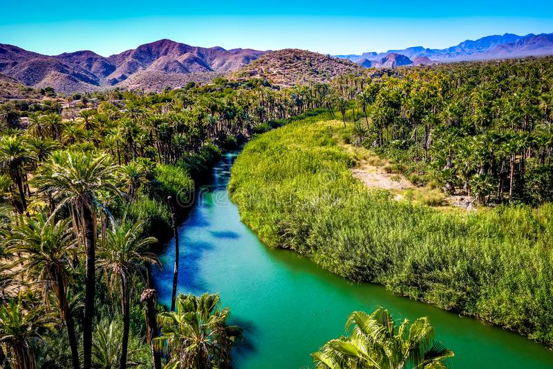 Rio que corre através de uns oásis em Mulege, Baja, México imagem de stock
