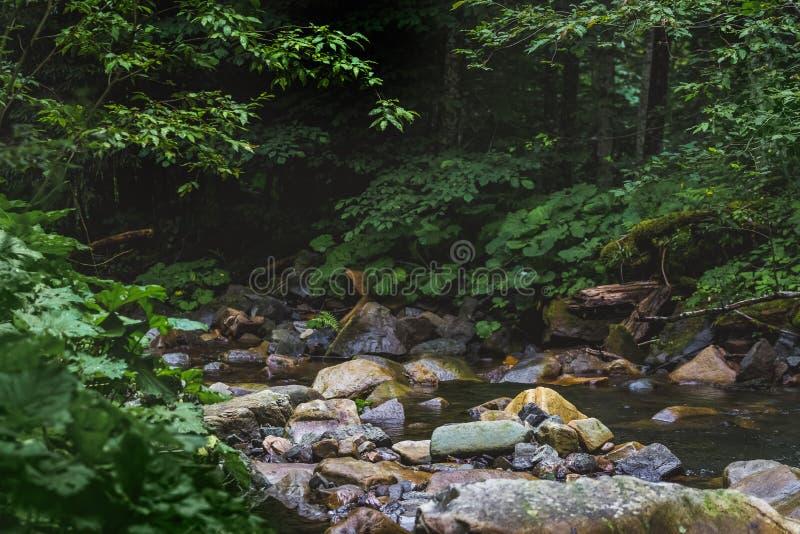 Rio raso da montanha entre os arvoredos grossos de um forest_ denso fotos de stock