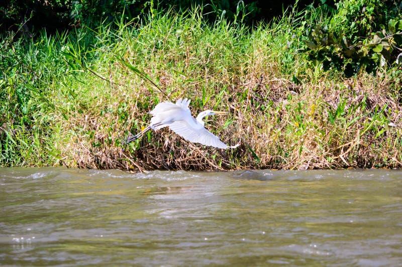 Rio San Juan-Flug lizenzfreies stockfoto