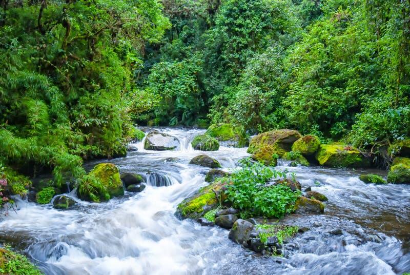Rio Savegre, un fiume di urlo vicino a San Gerado de Dota, Costa Rica fotografia stock