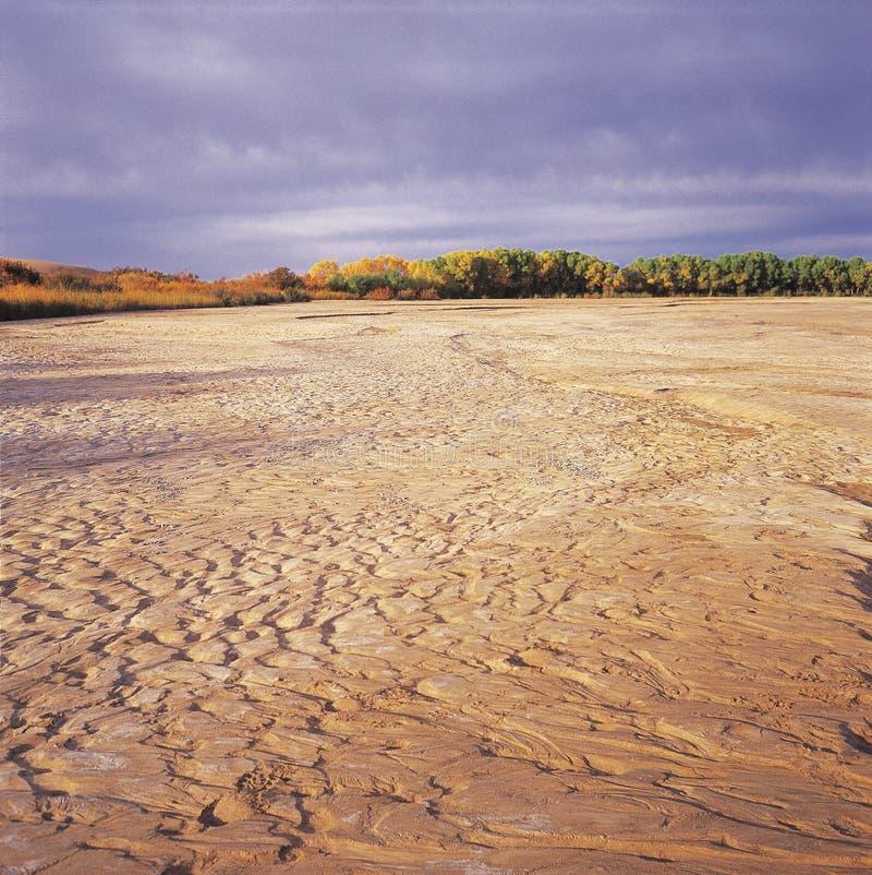 rio seco e as árvores ilustração do vetor