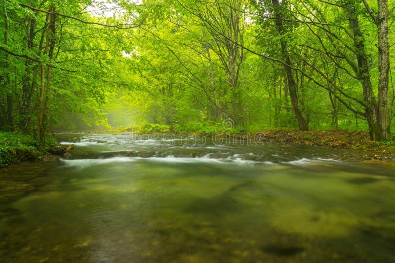 Rio selvagem enevoado na floresta na mola fotografia de stock