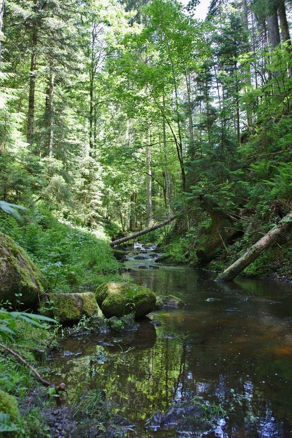 Rio selvagem no Ravennaschlucht no verão fotografia de stock