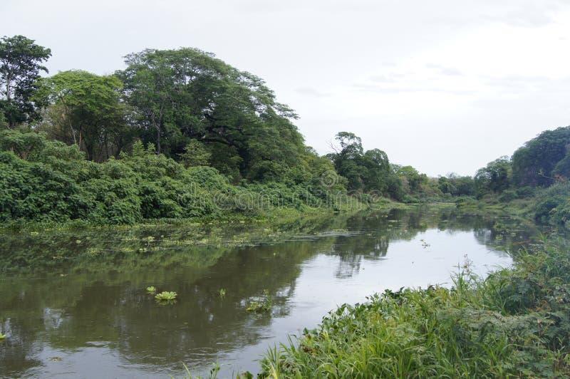 Rio Tempisque tropical imagem de stock royalty free