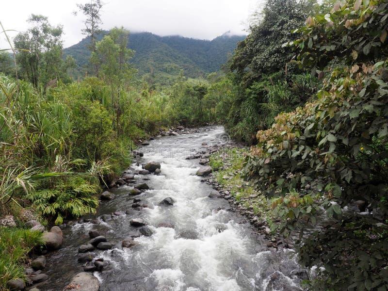 Rio tropical, Mindo, Equador fotos de stock