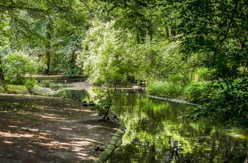 Rio verde da floresta fotos de stock royalty free