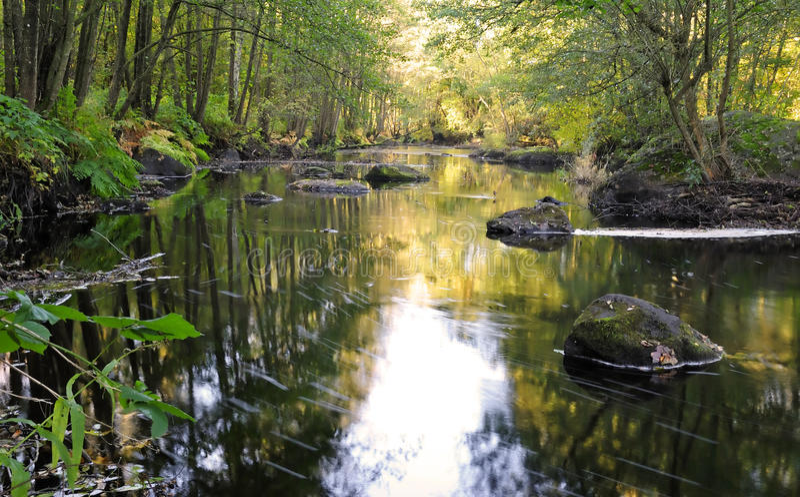 Rio virgem sueco na floresta fotos de stock royalty free