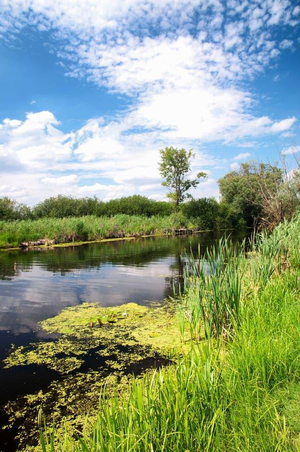 Rio Zala no lago Balaton, Hungria foto de stock