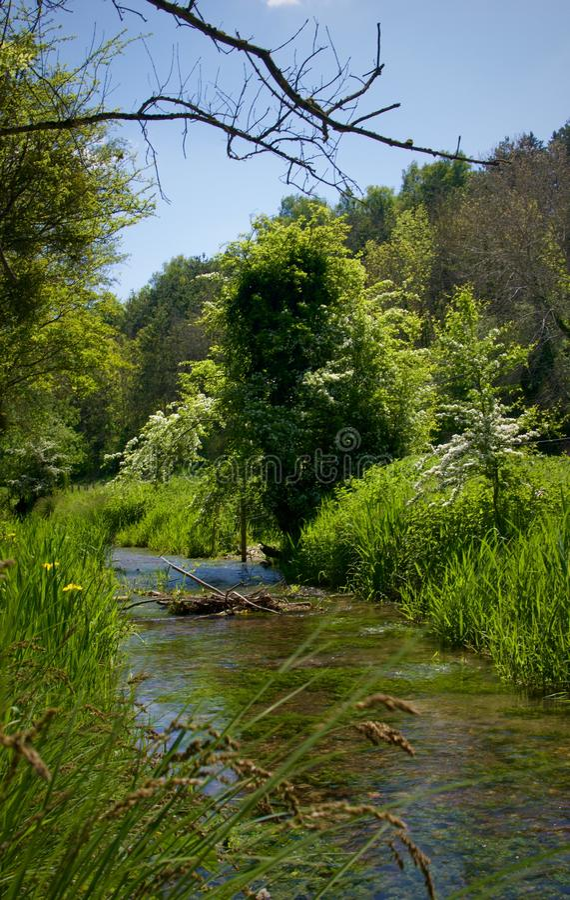 Rios e ?rvores imagens de stock