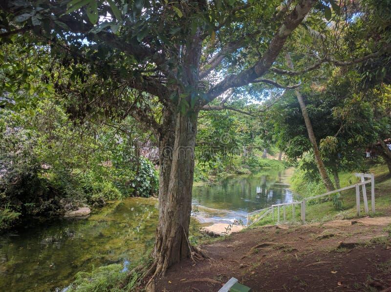Rios em Vila, Vanuatu imagens de stock