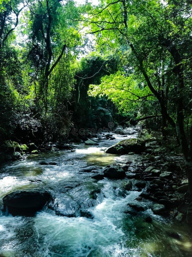 Rios Manzanares fotografia de stock royalty free