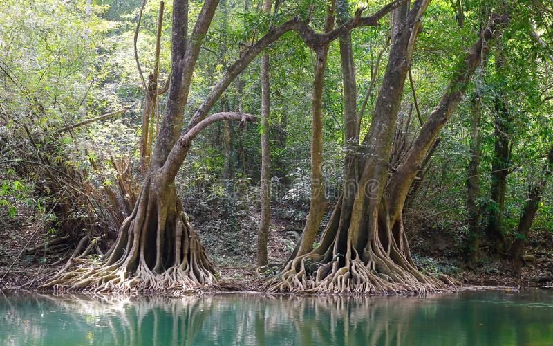 Riparian forest royalty free stock photography