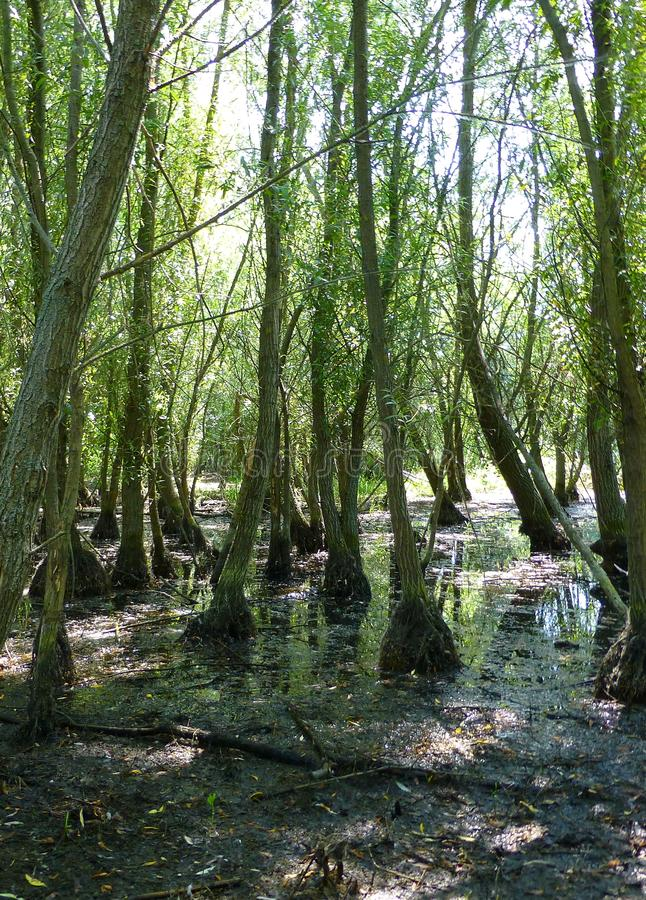 Riparian forest on a sunny day royalty free stock image