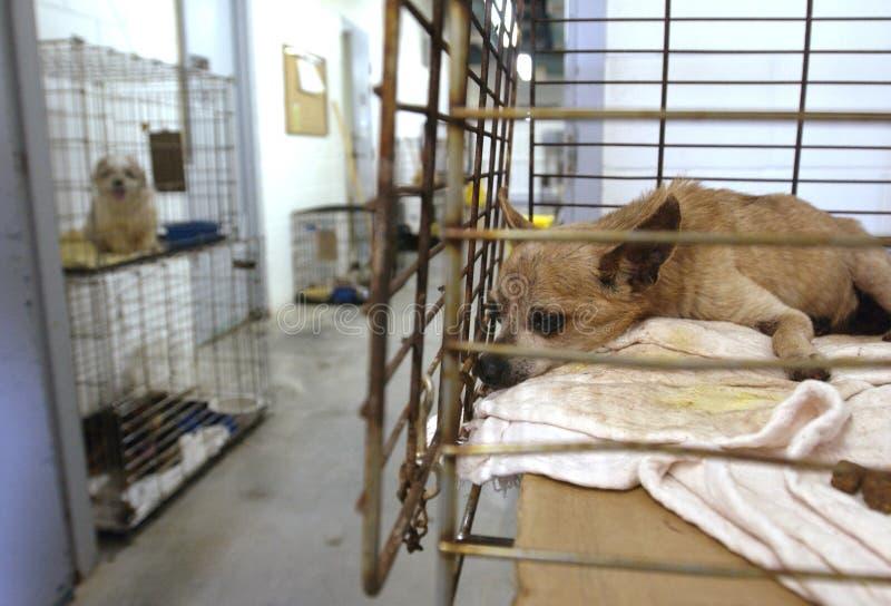 Riparo animale fotografie stock