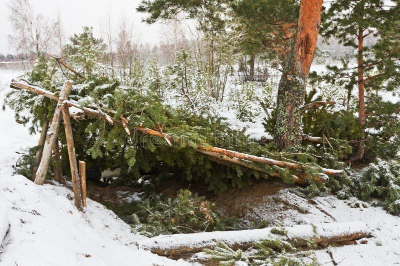 Riparo della foresta immagini stock libere da diritti