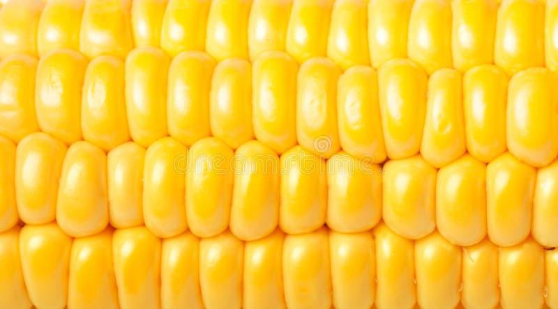 Download Ripe Appetizing Corn. Stock Photo - Image: 32230490