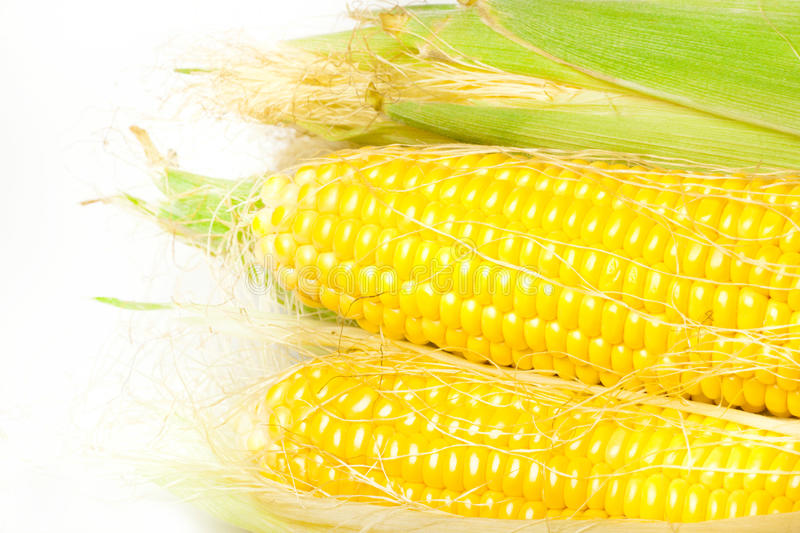 Download Ripe Appetizing Corn. Royalty Free Stock Photography - Image: 32230527