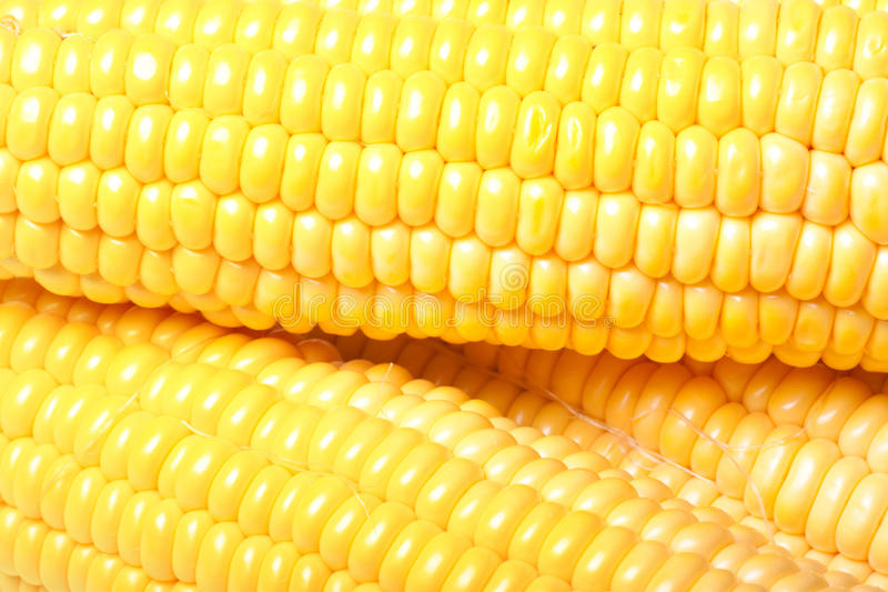 Ripe Appetizing Corn. Stock Photography