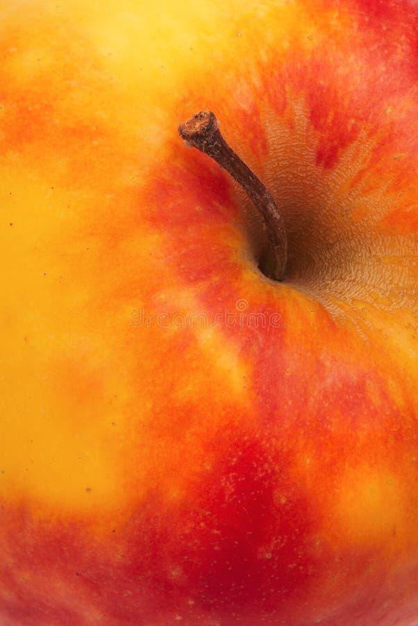 Download Ripe apple stock photo. Image of brown, background, orange - 6242958