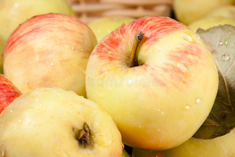 Ripe apples royalty free stock photos
