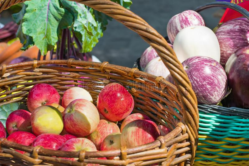 Ripe apples in a basket, the harvest in the garden royalty free stock image