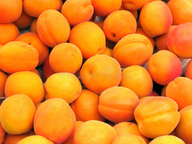 Ripe apricot fruit stock image