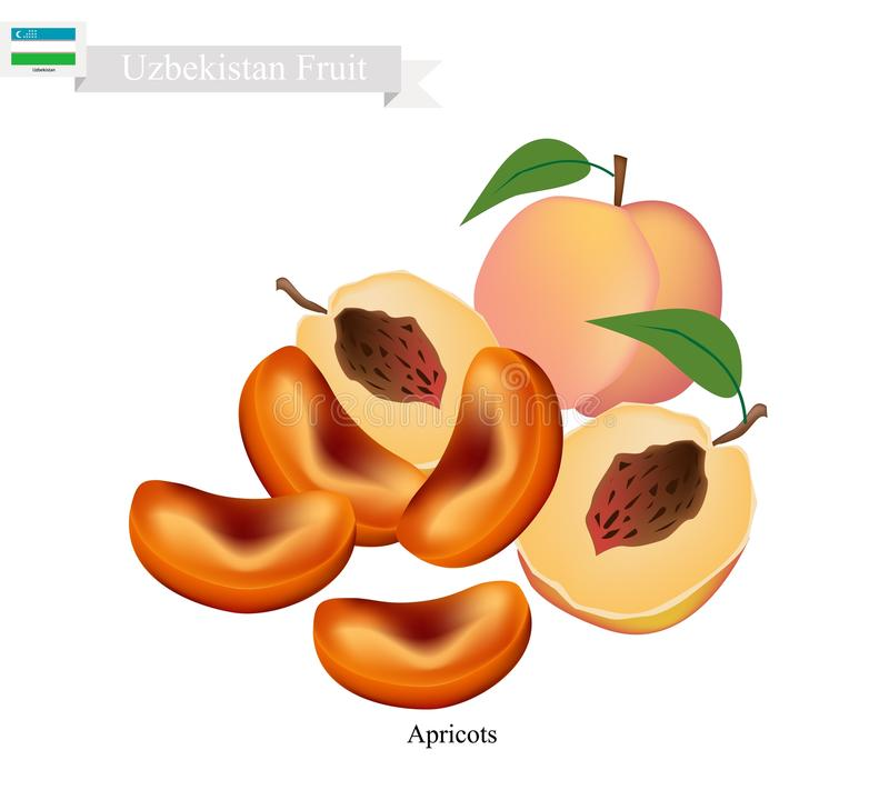 Ripe Apricot, A Popular Fruit in Uzbekistan. Uzbekistan Fruit, Dried Apricot. One of The Most Popular Fruits of Uzbekistan royalty free illustration