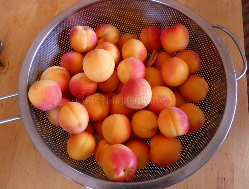 Ripe apricots in sieve stock image