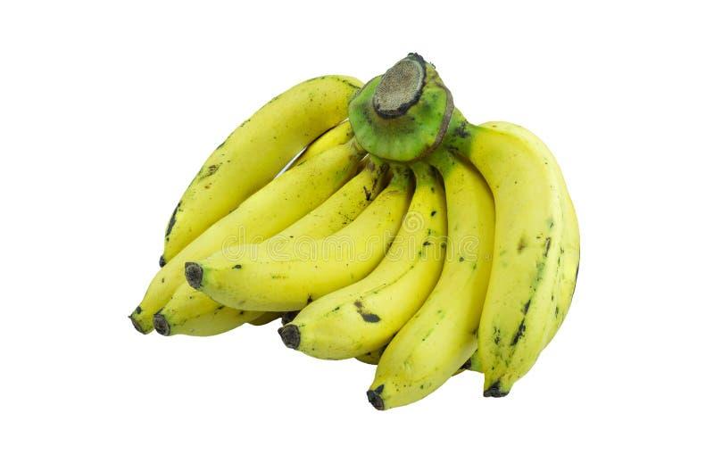 Ripe bananas royalty free stock photos