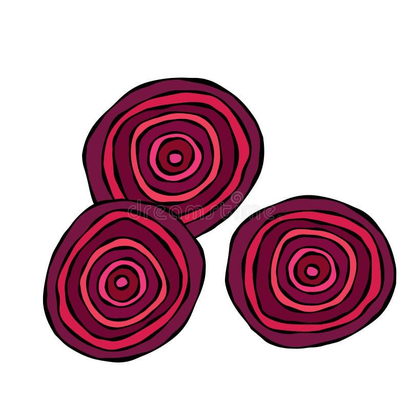 Ripe Beet - Round Slices of Beetroot, Cut Beet. Fresh Vegetable Salad. Hand Drawn Vector Illustration. Savoyar Doodle Style. Ripe Beet - Round Slices of vector illustration